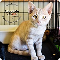Adopt A Pet :: A..  Abby - Mooresville, NC