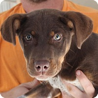 Adopt A Pet :: Snickers - Harmony, Glocester, RI