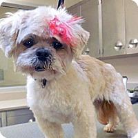 Adopt A Pet :: 327788 - Wildomar, CA