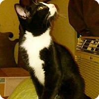 Adopt A Pet :: Spirit - Danbury, CT