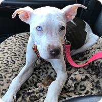 Adopt A Pet :: Fiona - Detroit, MI