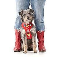 Adopt A Pet :: RORY - san diego, CA