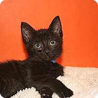 Adopt A Pet :: ZACHARY - SILVER SPRING, MD