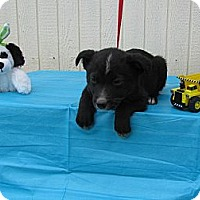 Adopt A Pet :: Peppie - Humboldt, TN