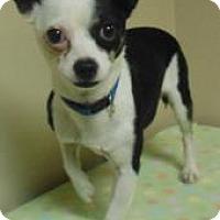 Adopt A Pet :: Louie - Gary, IN