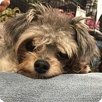 Adopt A Pet :: Cory - Orlando, FL