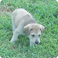 Adopt A Pet :: Morris Adoption pending - East Hartford, CT