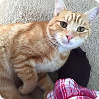 Adopt A Pet :: Oscar - Fredericksburg, VA