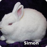 Adopt A Pet :: Simon - Auburn, CA