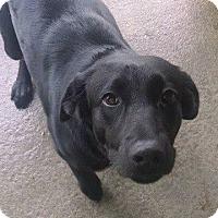 Adopt A Pet :: Rosie - Charleston, SC