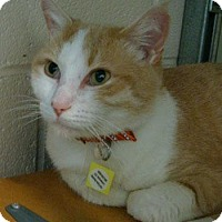 Adopt A Pet :: P.J. - Lakewood, CO