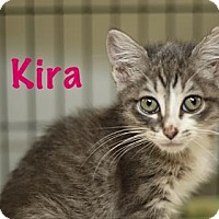 Adopt A Pet :: Kira - Baton Rouge, LA