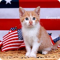 Adopt A Pet :: Freedom - Sterling Heights, MI