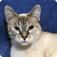 Adopt A Pet :: Snowflake - Yorba Linda, CA