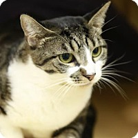 Adopt A Pet :: Sophie Grace - Kettering, OH