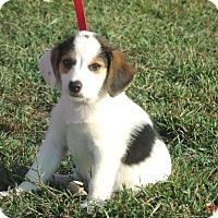 Adopt A Pet :: BUSTER - Sanford, ME