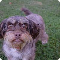 Adopt A Pet :: Edna - Sacramento, CA