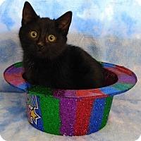 Adopt A Pet :: Eve - Elkhorn, WI
