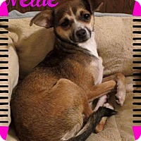 Adopt A Pet :: Nellie - Fort Wayne, IN