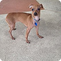 Adopt A Pet :: Bambi - Richmond, VA