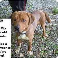 Adopt A Pet :: # 269-09 - Animal Shelter - Zanesville, OH