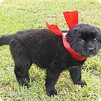 Adopt A Pet :: Divine - New Boston, NH