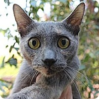 Adopt A Pet :: Lana - Santa Monica, CA