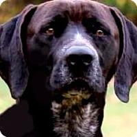 Adopt A Pet :: MALLARD(SO GENTLE--SO LOVING!! - Wakefield, RI