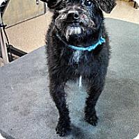 Adopt A Pet :: Mo - Knoxville, TN
