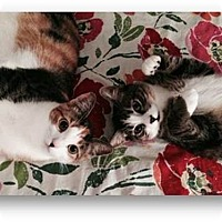 Adopt A Pet :: Tobi and Candi - Miami, FL