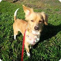 Adopt A Pet :: Lilly - Santa Rosa, CA
