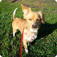 Adopt A Pet :: Lilly - Santa Rosa, CA