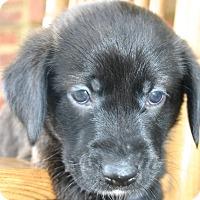 Adopt A Pet :: Benjamin - Foster, RI