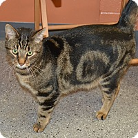 Adopt A Pet :: Tommy - Michigan City, IN