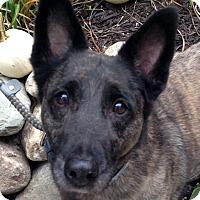 Adopt A Pet :: Pete - Fennville, MI