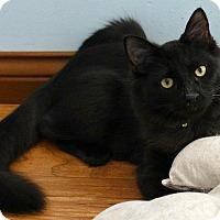 Adopt A Pet :: NCIS--Donald Mallard