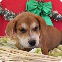 Adopt A Pet :: Farmer - Waldorf, MD