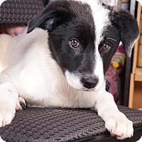 Adopt A Pet :: Steven - Sudbury, MA
