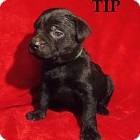 Adopt A Pet :: Tip - Batesville, AR