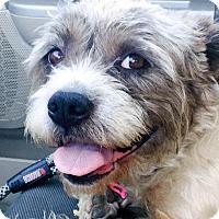 Adopt A Pet :: Maggie - Marina del Rey, CA