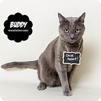Adopt A Pet :: Buddy - Wyandotte, MI