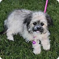 Adopt A Pet :: AIMEE - Newport Beach, CA