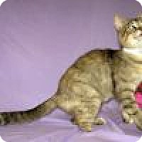 Adopt A Pet :: Trinity - Powell, OH