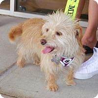 Adopt A Pet :: Raksha Kipling - Houston, TX