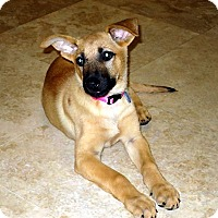 Adopt A Pet :: Jules - Downey, CA