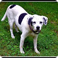 Jack Russell Terrier Mix Dog for adoption in Ellijay, Georgia - Pepper