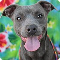 Adopt A Pet :: WEASEL - Red Bluff, CA