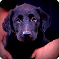 Adopt A Pet :: Trip - Glastonbury, CT