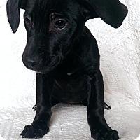 Adopt A Pet :: Dora (MD-Kelly) - Newark, DE