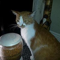 Adopt A Pet :: Sassy - Sunny Isles Beach, FL